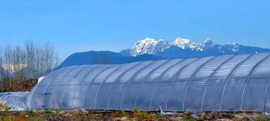 Greenhouse, with the Golden Ears peaks, Pitt Meadows