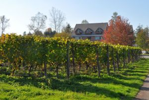Backyard Vineyards, Langley