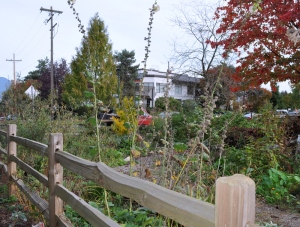 A community garden, part of a park built across the Prince Edward Street right-of-way