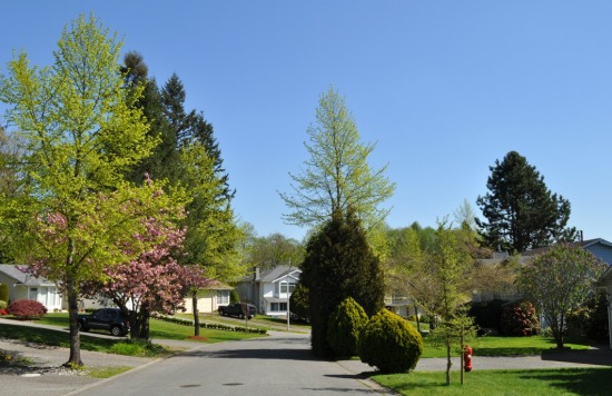 spring in the suburbs reduced